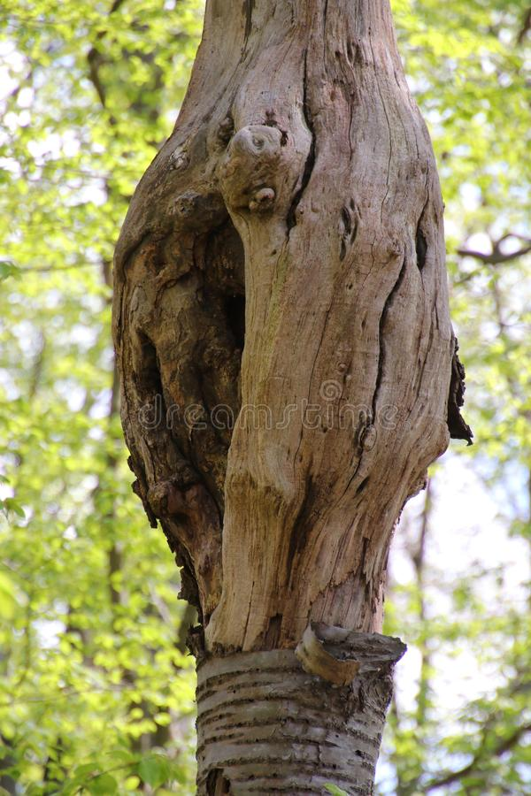 deadwood fotos de stock