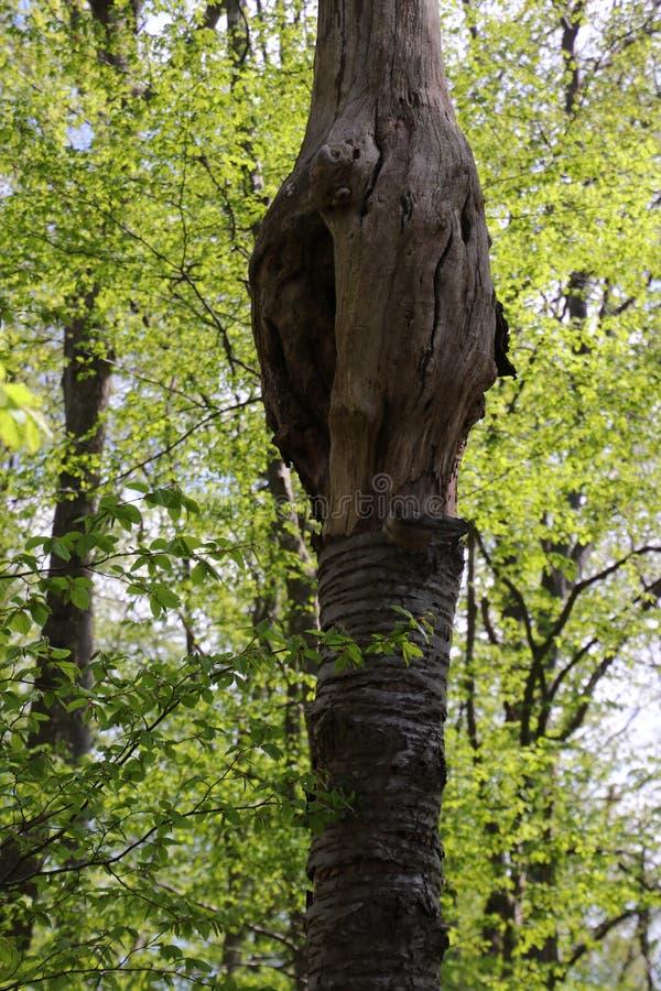 deadwood foto de stock royalty free