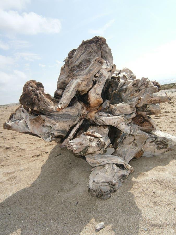 Deadwoodinloggning en strand arkivbild