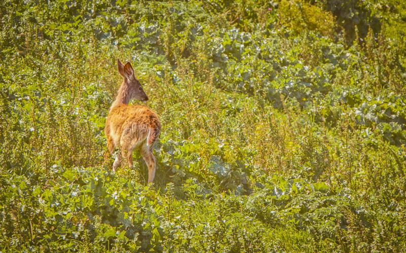 Dear wild field nature animal stock photography