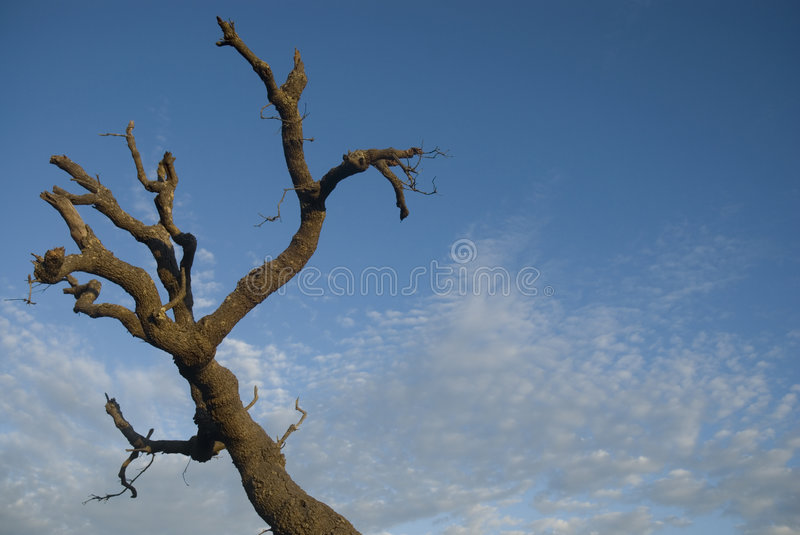 Death tree. And white clouds on the beach royalty free stock image