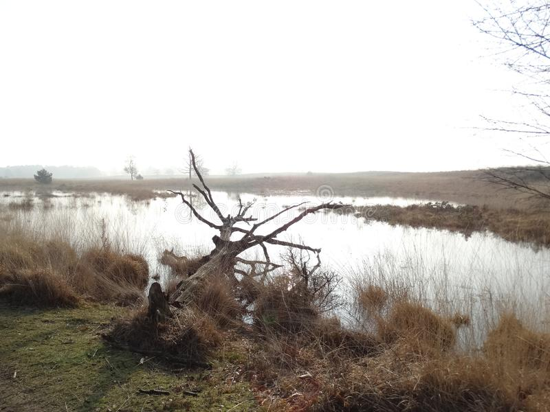 Death tree laying in a lake. In Boxtel in the Netherlands calm stock photo