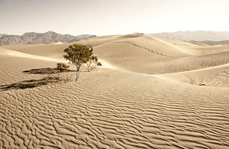 Death Valley fotos de archivo libres de regalías