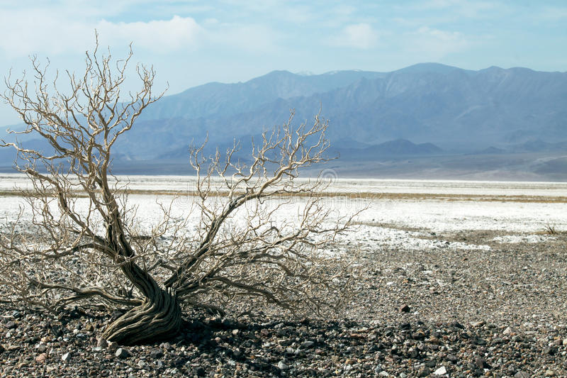 Death Valley arkivfoton