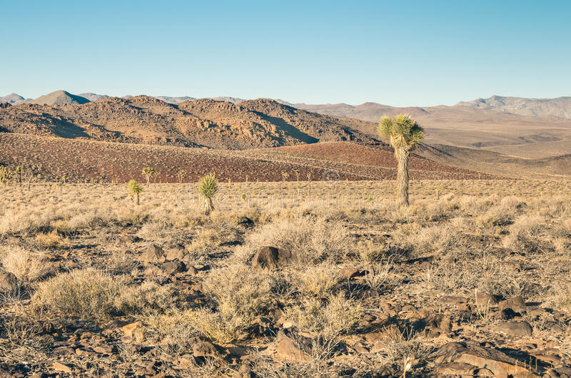Death Valley - Cactus in the Desert. Death Valley - Landscape with a cactus in the Desert stock image