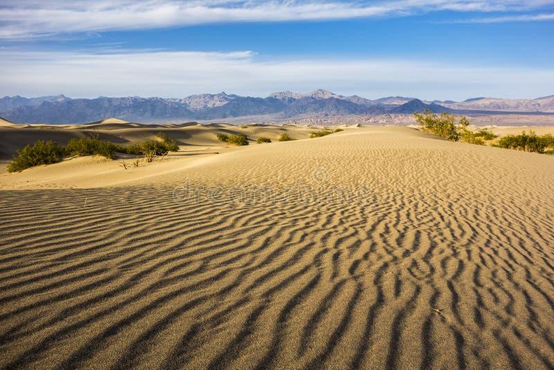 Death Valley Dunes. Rippling golden sand of Mesquite Flat Dunes, Death Valley stock photo