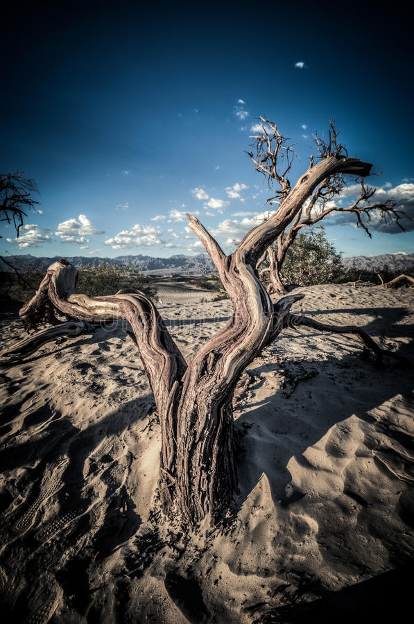 Death Valley dunes wood in HDR stock images