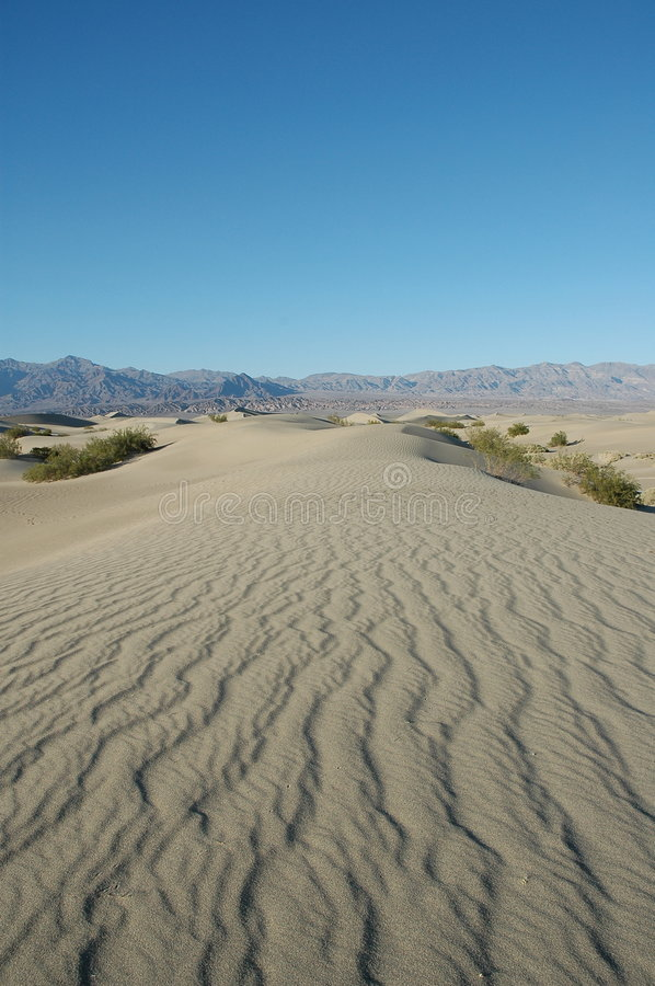 Death Valley N.P. Sand Dunes royalty free stock photo