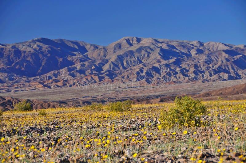 Death Valley in primavera immagine stock libera da diritti