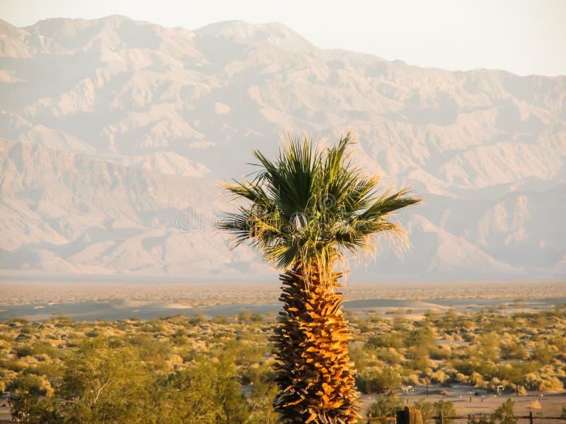 Death Valley tr?d royaltyfria bilder