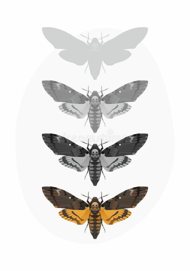Free Deaths-head Hawk Moth Set (Acherontia Atropos) Stock Images - 52024104