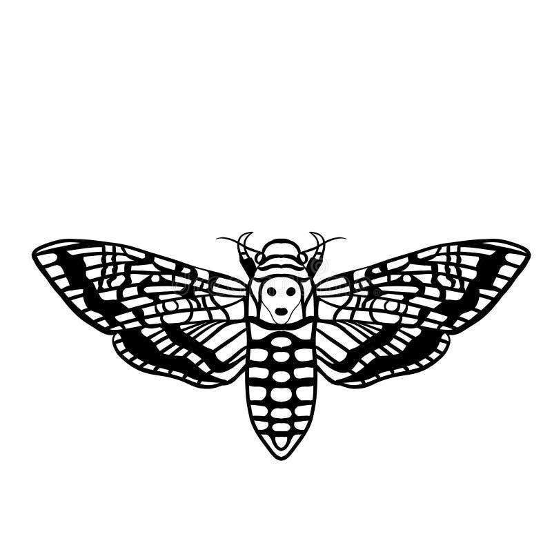 Deaths head moth illustration. A black and white illustration of the death's-head hawkmoth stock photo
