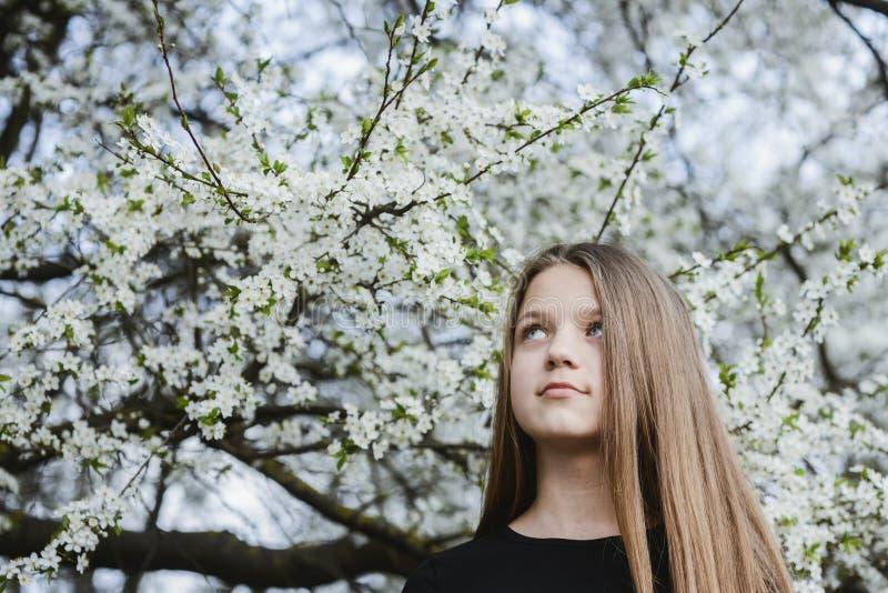 Debajo de árbol del flor imagen de archivo libre de regalías