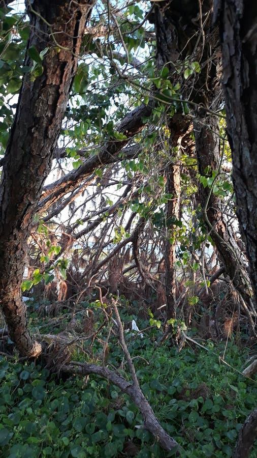 Debajo de árbol de la tormenta fotografía de archivo