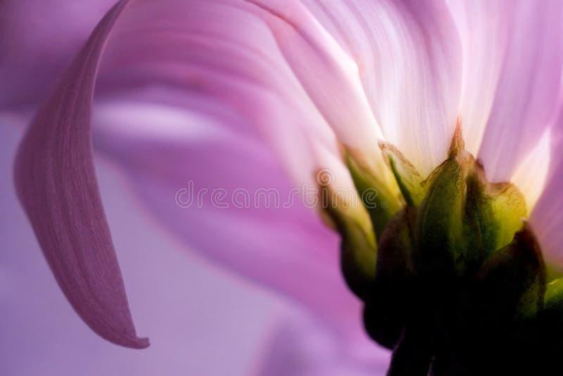 Debajo de la flor foto de archivo