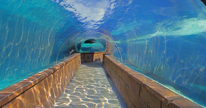 Debajo de los tiburones en el centro turístico Bahamas de la Atlántida imagen de archivo libre de regalías