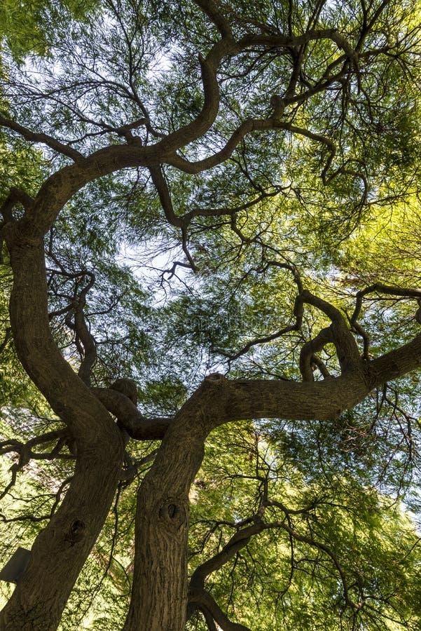 Debajo del árbol fotografía de archivo libre de regalías