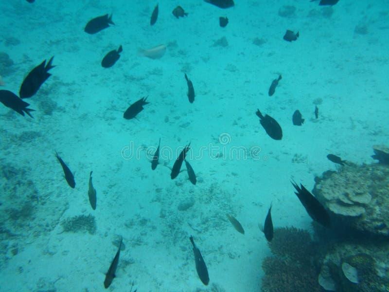 Debajo del mar imágenes de archivo libres de regalías