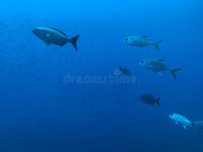 Debajo del mar fotos de archivo