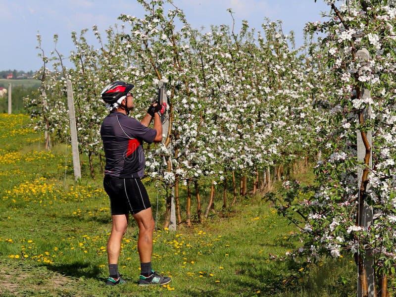 Debowiec, Pologne - 26 avril 2018 : Un cycliste prend une photo dans un champ de pommiers de floraison Plantation de floraison de image libre de droits