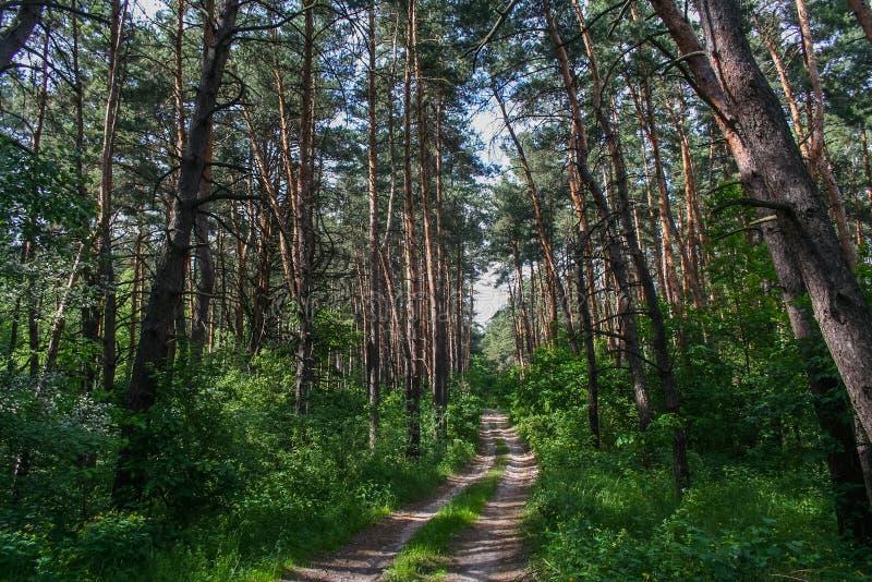 Debrowski a floresta imagem de stock
