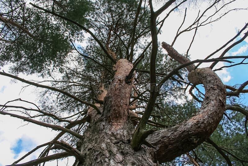 Debrowski a floresta imagem de stock royalty free
