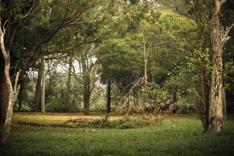 Decadencia en el jardín encantado foto de archivo libre de regalías