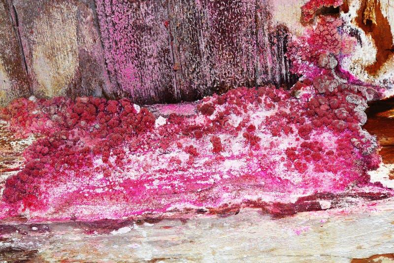 Decadimento fungoso sul fascio di legno della costruzione immagini stock