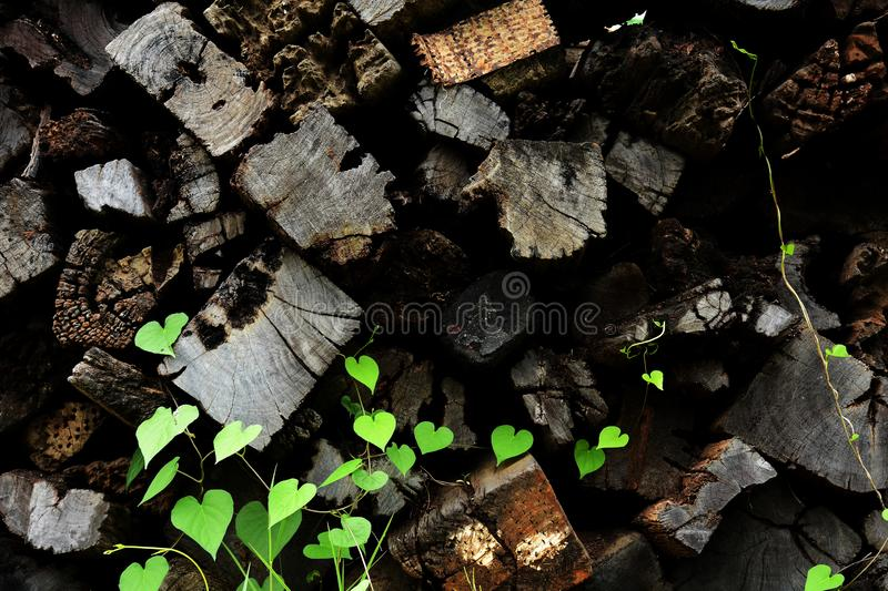 Decay of old wood timber construction material. Decay of old wood timber construction material for background and texture royalty free stock images