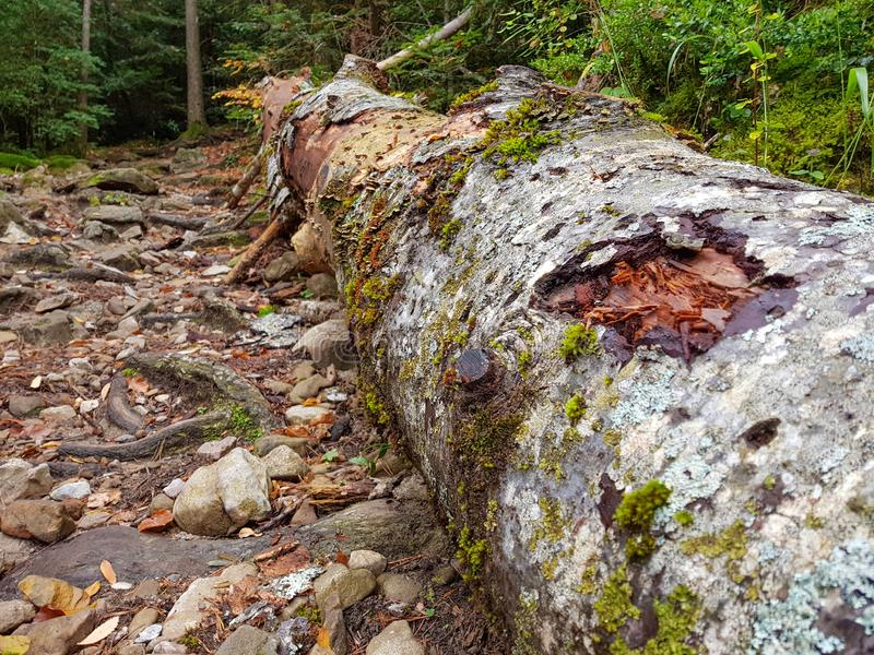 Decayed fallen tree laying on grass in Ordesa y Monte Perdido National Park, Huesca. Spain stock image