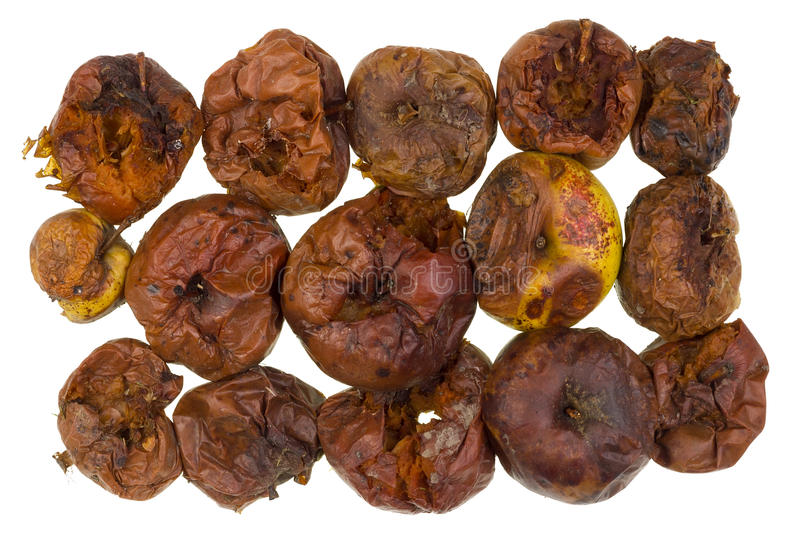Decayed smelly apples. Set of the delightful rotten decayed smelly apples stock photos