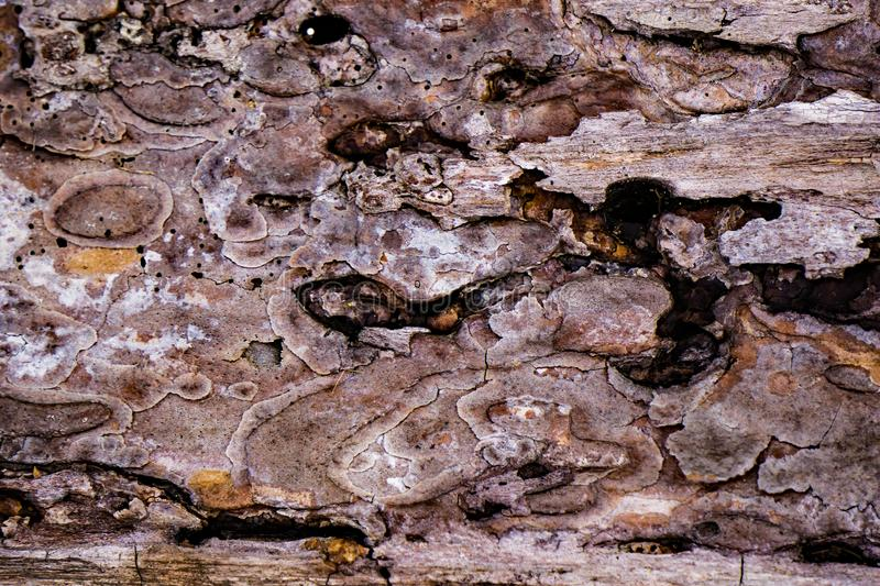 Decayed Tree Bark. Decayed pine tree bark ideal as an abstract background stock photo