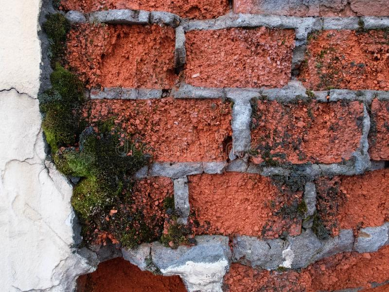 Decaying of erosion mossy red brick wall with remains of plaster of 18th century building stock image