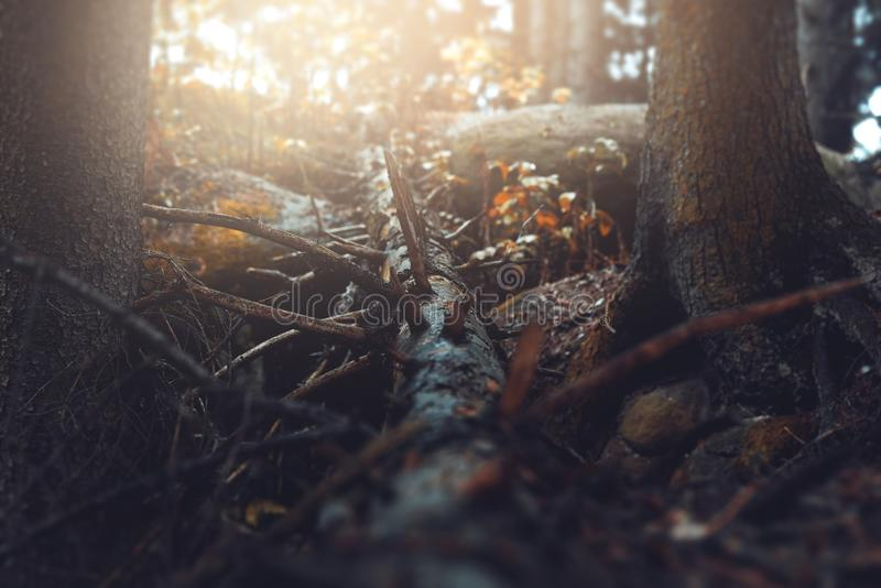 Decaying fallen tree stock photography