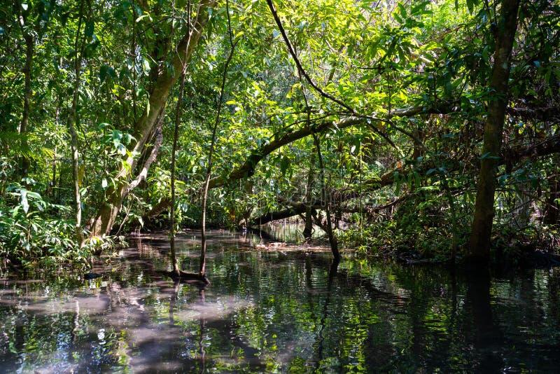 22 December 2018-Thailand:: loppmangroveskog med roddbåten fotografering för bildbyråer