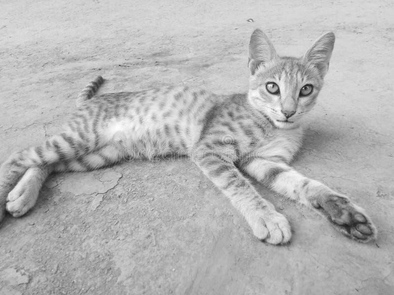 Decent cat royalty free stock image