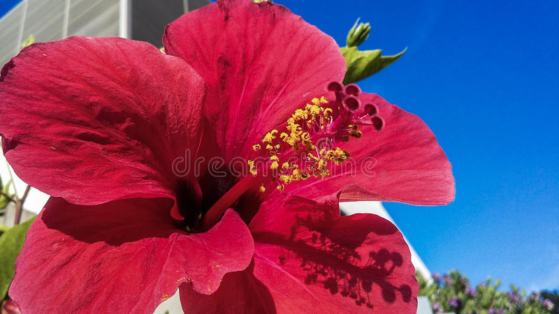 Decidida royalty free stock images
