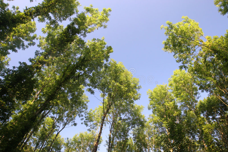 Deciduous Canopy stock photography