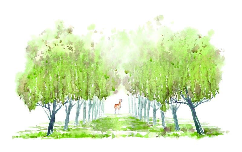 Deciduous drzewa rogacze i aleja niebieska spowodowana pola pe?ne si? chmura dzie? zielonych ro?lin krajobrazu ruchu pokaz ma?y n ilustracji