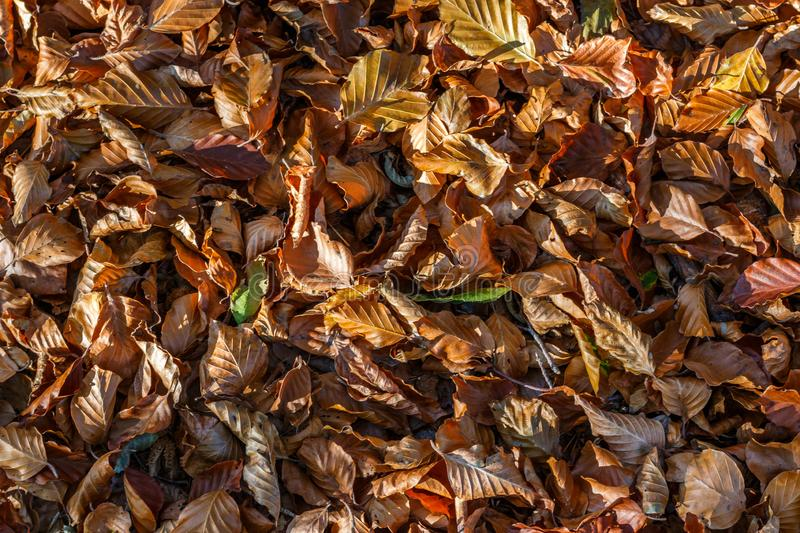 Autumnal deciduous soil. A deciduous ground in autumn in a forest stock photo