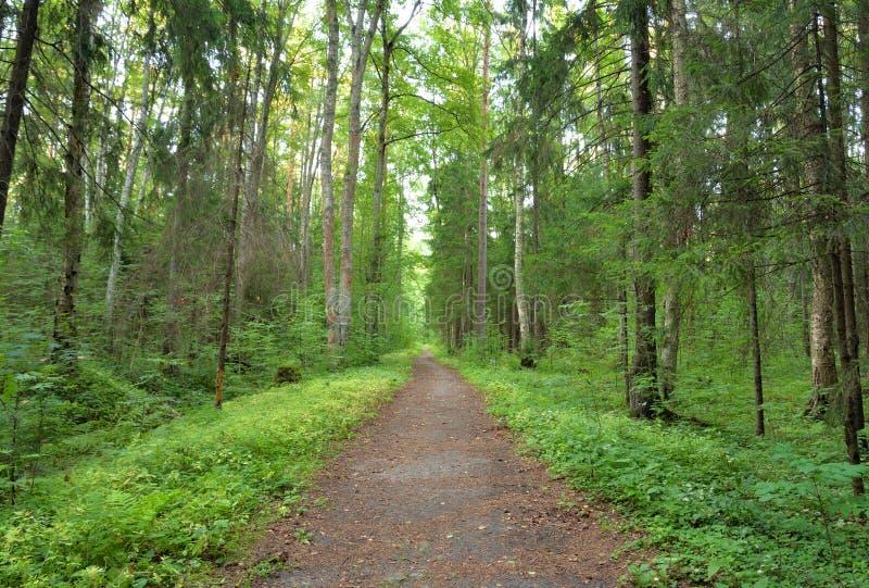 Deciduous las przy latem obrazy stock