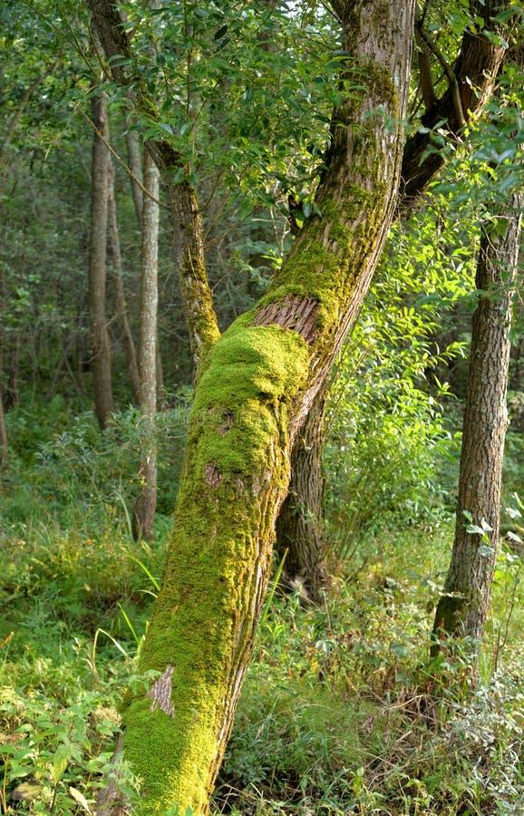 Deciduous las przy latem zdjęcie stock