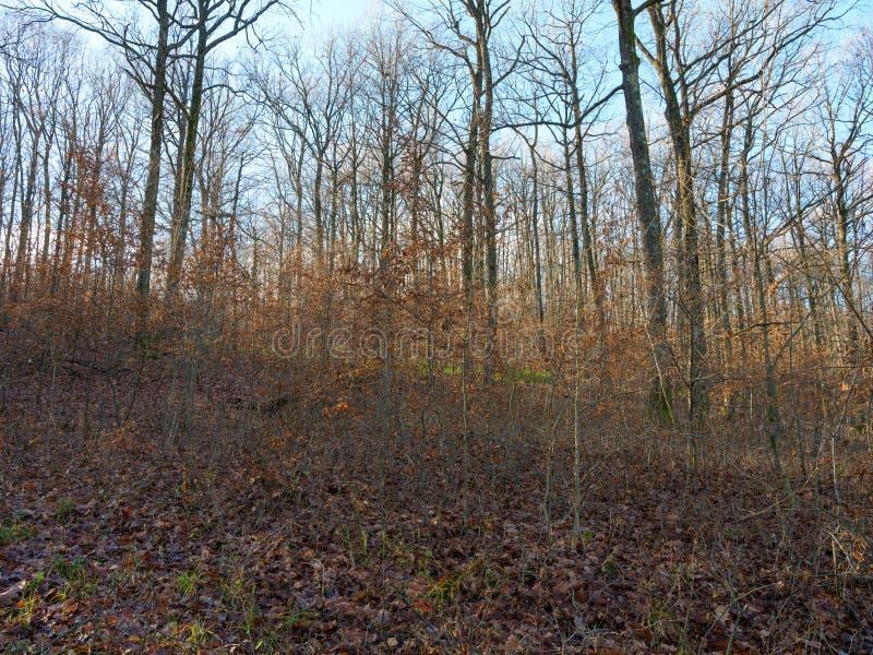 Download Deciduous las w jesieni zdjęcie stock. Obraz złożonej z pomarańcze - 106912400