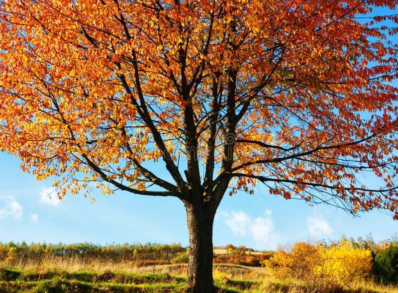 Deciduous tree background royalty free stock photo