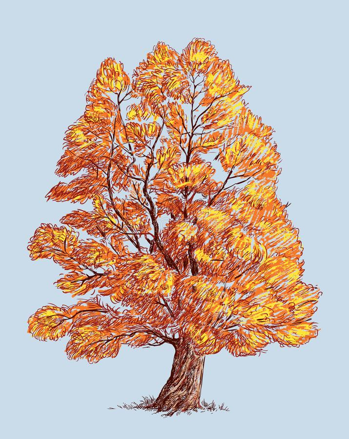 Deciduous tree in the autumn stock illustration