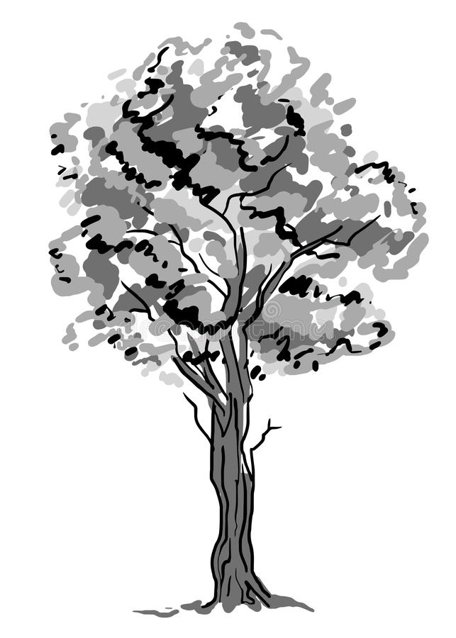 Deciduous tree sketch. Black contour isolated on white background. Simple art. Can be used for card banner template royalty free stock photography