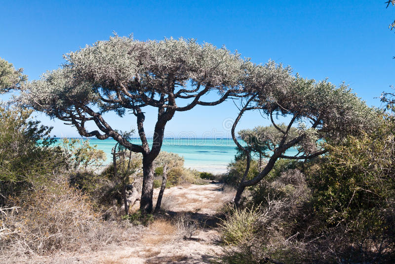 deciduous vegetation royaltyfri fotografi