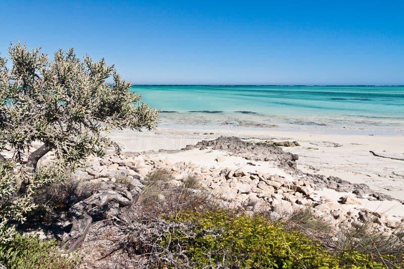 Download Deciduous vegetation stock photo. Image of ocean, sand - 23430074