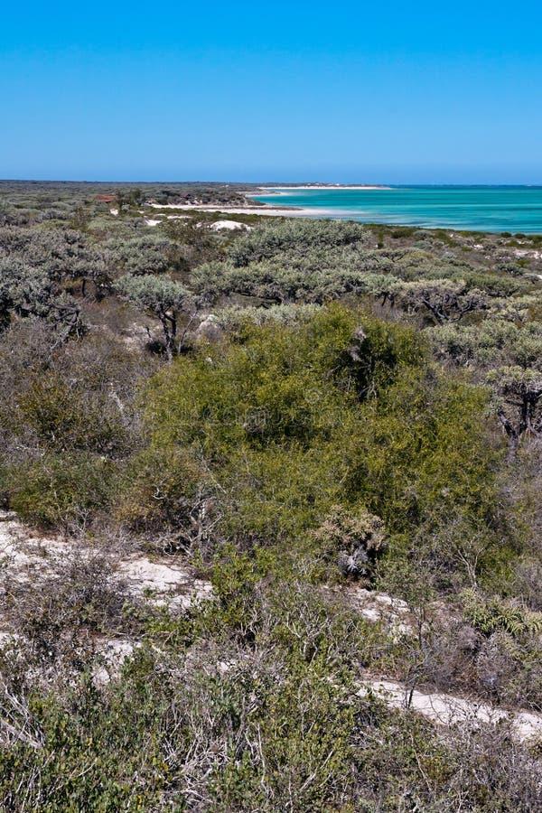 Deciduous vegetation