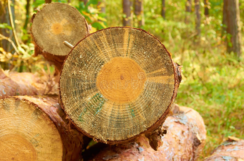 Download Deck stock image. Image of close, timber, up, tree, nature - 27237851